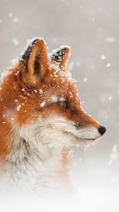 Cute Wild Animals, Cute Cartoon Animals, Cute Little Animals, Animals Beautiful, Funny Animals, Fox Pictures, Baby Animals Pictures, Cute Animal Pictures, Nature Animals