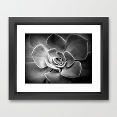 Soften your décor with the Succulent Contrast Art Print. Featuring a beautiful image of a succulent plant in shades of shadowy gray, the print is neutral enough to mix with a variety of color schemes a...  Find the Succulent Contrast Art Print, as seen in the Prints Collection at http://dotandbo.com/category/decor-and-pillows/for-the-wall/prints?utm_source=pinterest&utm_medium=organic&db_sku=SO60328