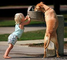 Helping his best buddy get a drink on a hot Summer day..... So unbelievably cute!