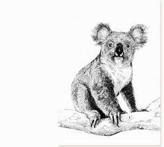 JONATHAN CHADWICK, Artistic Type : Claremont Australian Wines, Koala Illustration