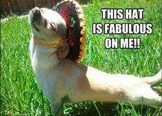 This hat is fabulous on me funny memes animals dog puppy meme lol cute. humor funny  animals