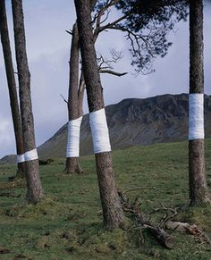Welsh-born artist and photographer Zander Olsen is slowly wrapping the UK's woodland in white material