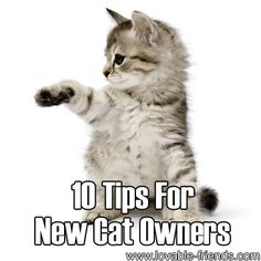 Please Share This Page: Photo – © robert – Fotolia.com When it comes to owning cats, it's essential that you choose one that will fit your personality. If you want to know what they are, our friends at Pet MD were kind enough to provide a list of tips for us to keep in mind. …