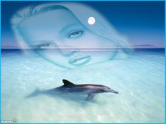 dolphin #