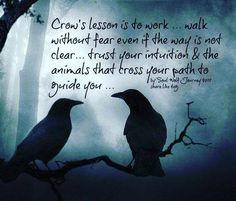Pagan Witch, Wiccan, Magick, Witches, Raven Spirit Animal, Animal Spirit Guides, Crow Facts, Witch Tattoo, Baby Witch
