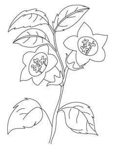 The Bellflower Coloring Page