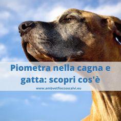 Sai co'è la piometra nel #cane? Che è emergenza che potrebbe insorgere ad ogni calore? Per non arrivare a farla diventare una emergenza #veterinaria,ti consiglio di leggere questo articolo😉😉