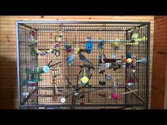 ▶ Parakeets chirping singing kissing and playing around - YouTube