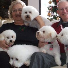 Family of rescued bichons from Small Paws That's gotta be a handful but soooo worth it!
