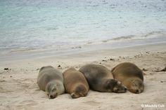 A Lucila do BLOG mochila cult  foi para Galápagos já esperando se deparar com diversos animais exóticos, o que ela não esperava era se deparar com centenas de leões marinhos!