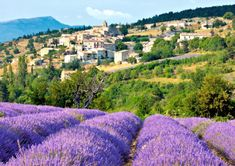 Lavender fields and the village of Aurel in Provence-Alpes-Cote d'Azur © Jayanand Govindaraj / Dreamstime Oh The Places You'll Go, Places To Travel, Places To Visit, Dream Vacations, Vacation Spots, Beautiful World, Beautiful Places, Amazing Places, Beautiful Flowers