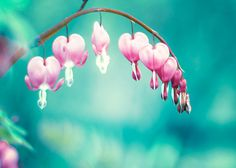"""Floral Photography - wall art prints nature photography aqua decor turquoise teal pink flower photograph - 5x7 Photo, """"Follow Your Heart"""". $15.00, via Etsy."""