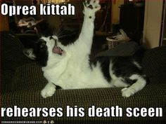 made. my. night    Google Image Result for http://icanhascheezburger.wordpress.com/files/2007/12/funny-pictures-opera-cat.jpg