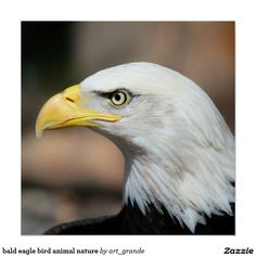 bald eagle bird animal nature poster