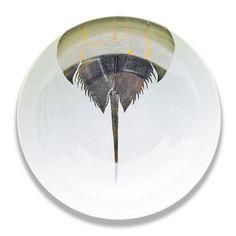 "Horseshoe Crab (G/PL) - 13"" Bowl - SLB-310"
