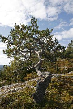 Landscape from Lapland, Finland Photo Aili Alaiso