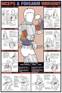 Chart that shows exercises for each area of the biceps and forearms...think about how you can modify in chair, floor, and standing positions to best meet the needs of your body...