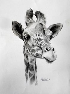 View Jennifer Doehring's Artwork on Saatchi Art. Find art for sale at great prices from artists including Paintings, Photography, Sculpture, and Prints by Top Emerging Artists like Jennifer Doehring. Realistic Animal Drawings, Pencil Drawings Of Animals, Animal Sketches, Art Drawings Sketches, Cute Drawings, Giraffe Drawing, Giraffe Art, Giraffe Painting, Giraffe Tattoos