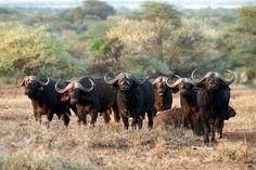 Serengeti 9:e mars - Naturfotograf Hasse Andersson