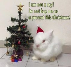 They would be the BEST Christmas gift EVER !!! | BUNNIES CH III ...