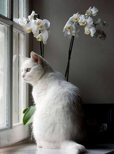 white =^.^= CÅt§ in The Window ♥