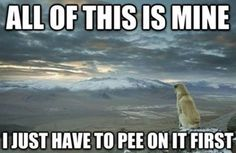 How Every Dog Thinks