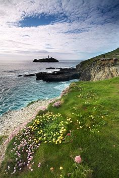 By Cornwall Photos- Yellow and Pink Wild Flowers of Godrevy, Cornwall.