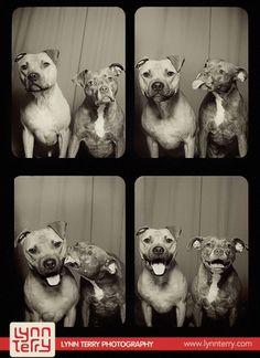 Lo que pasa cuando metes perritos en una cabina de fotos.