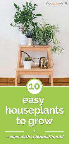 Easy Houseplants Anyone Can Grow 10 Easy Houseplants to Grow — Even With a Black Thumb! You can't mess this up . Easy Houseplants to Grow — Even With a Black Thumb! You can't mess this up .
