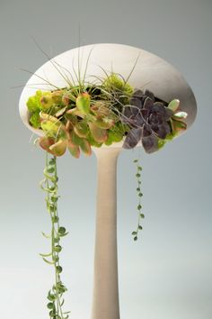 Futuristic Alien-Like Planters - Golly Pods by Tend