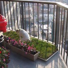 Diy Dog Grass Box Easy To Make And Less Than 40 At Home