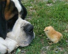 Unlikely animal friends