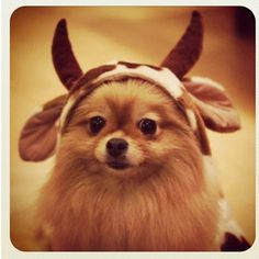 adorable puppy with a hat :)