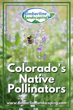 Bees aren't the only important native pollinators!