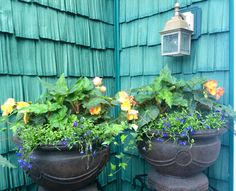 More begonia pots in the shaded area of our deck ---