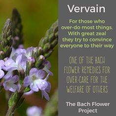Bach Flower Remedy - VERVAIN