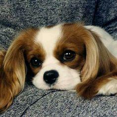 Like dog ;)