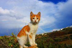 Kitten And Rainbow  Augusta Stylianou