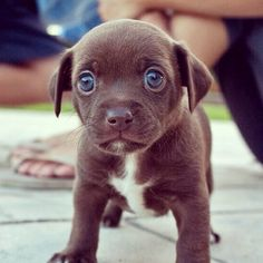 This Week Cute Doggy Pictures Puppy in the grass. Puppy Cup Someone little princesses Puppy Aww Eye stair. Lots of cute puppies. Tiny Puppies, Cute Dogs And Puppies, I Love Dogs, Dog Eyes, Puppy Eyes, Mundo Animal, My Animal, Animal Pictures, Cute Baby Animals