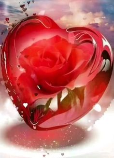 Beautiful Love Images, Good Morning Beautiful Flowers, Love Heart Images, Love You Images, Beautiful Rose Flowers, Beautiful Fantasy Art, Beautiful Nature Wallpaper, Rose Flower Wallpaper, Heart Wallpaper