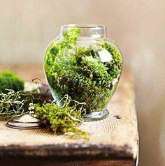 round terrarium with plants and moss
