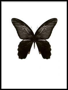 Snygg tavla med fjäril. Stilren tavla med fjäril.
