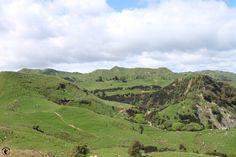 Die grünen Hügel Neuseelands - das kann man einfach nicht hässlich finden!