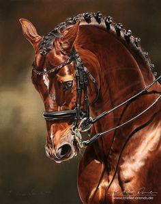 Dressage Horse Damon Hill NRW by AtelierArends Most Beautiful Horses, Pretty Horses, Horse Love, Animals Beautiful, Horse Photos, Horse Pictures, Arte Equina, Photo Animaliere, Horse Artwork