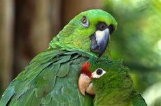 Parrot Pals   by Frank Scott Photography