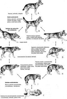 lenguaje canino III
