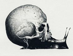 Skull snail by Riki Blanco. Art And Illustration, Illustrations, Memento Mori, Horror, Photocollage, Animal Skulls, Skull And Bones, Skull Art, Dark Art