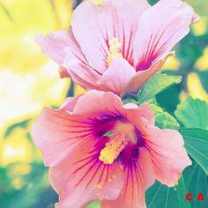 mode créative fleurs