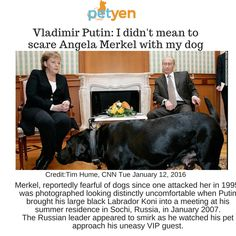 #PetYen4pets #Dogs #Putin #merkel #Lab