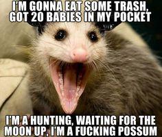 Thrift Shop Possum